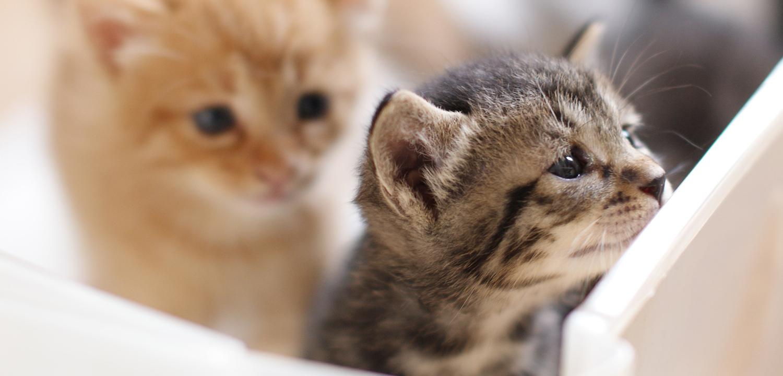 ヒトと動物が共に幸せに暮らしていくために