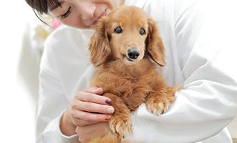 動物と家族の気持ちに寄り添った治療