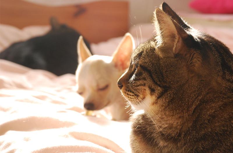 TNR(T・N・R)、保護猫、犬の殺処分ゼfい主のいない殺処分ロ